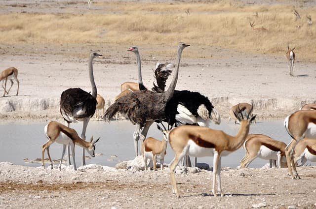 Desert National Park Is Famous For Which Animal antelope