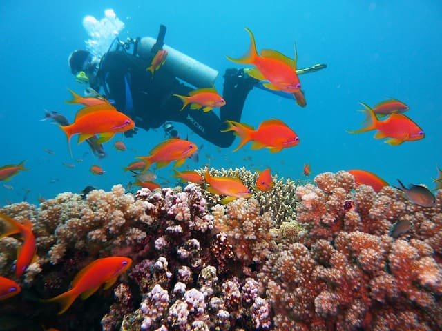 Scuba Diving In India Andaman And Nicobar Islands