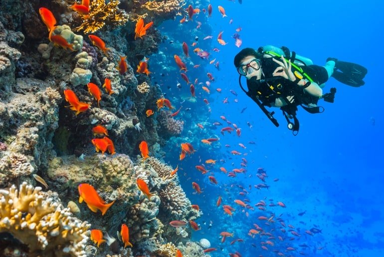 Scuba Diving In India: Scuba Diving In India Price