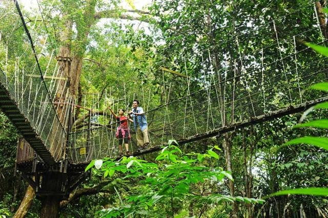 Things To Do In Penang National Park Hiking