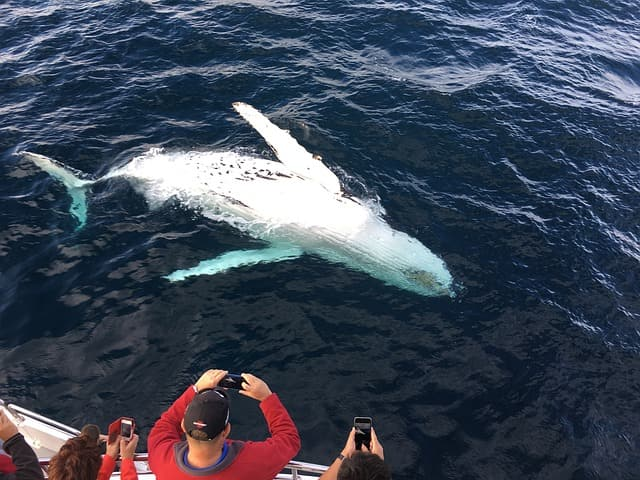 Whale Watching Tours Portland Maine