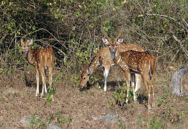 Bandipur National Park From Bangalore Tourist Place
