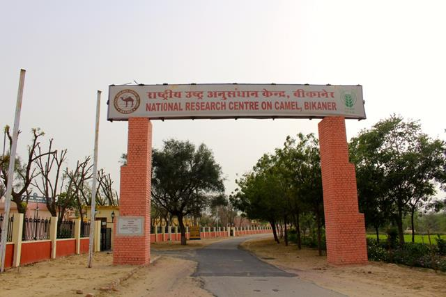 Bikaner Tourist Places: National Research Center On Camel