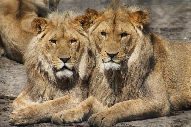 Places To Visit In Hyderabad City: Nehru Zoological Park Safari