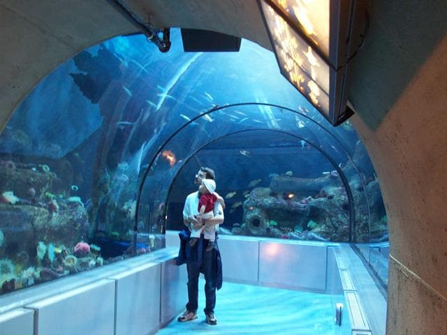 Places To Visit In Canada Aquarium Du Quebec City
