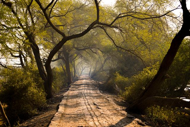 Places To Visit In Bharatpur Tourism Rajasthan