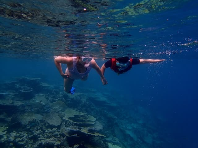 Things To Do In Florida Keys Vacation: Dry Tortugas Snorkeling