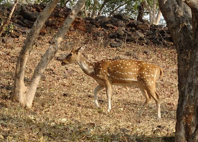Gir National Park Information Travel Guide