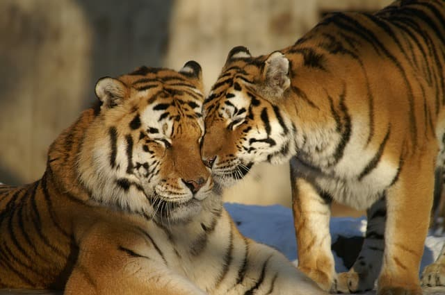 Sariska Tiger Reserve Places To Visit Near Delhi Within 200 Kms