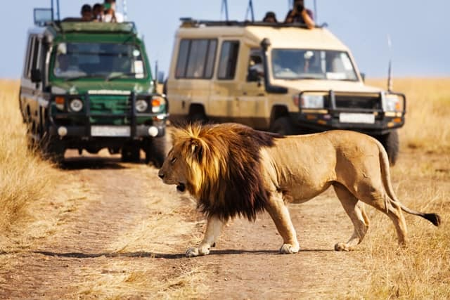 Gir National Park Safari Travel Guide