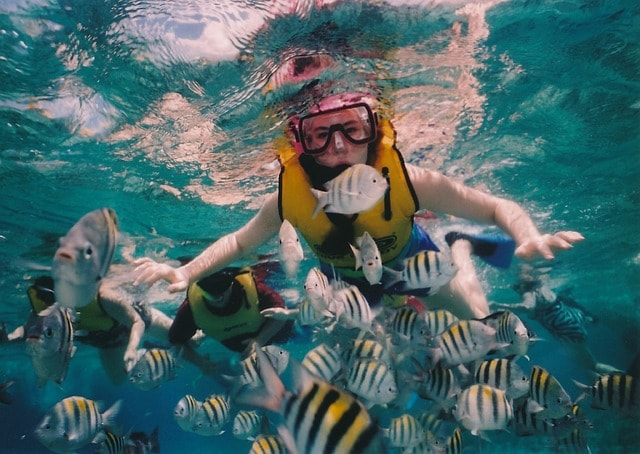 Things To Do In Cozumel Mexico: Playa Palancar Snorkeling Tour