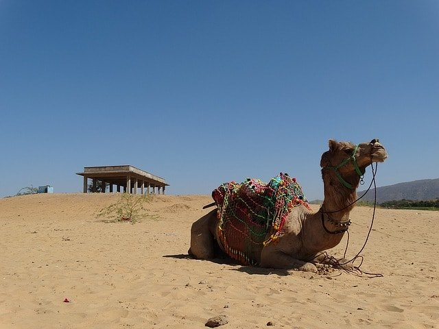 Tourist Places Near Delhi Within 500 Kms: Pushkar Tourism