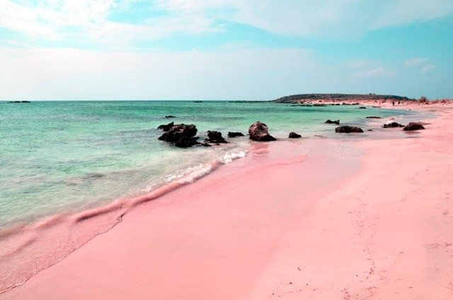 Pink Sands Beach Paradise Island In The Bahamas Vacation