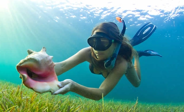 Bahia Honda State Park Snorkeling Popular Things To Do In Florida Keys Vacation