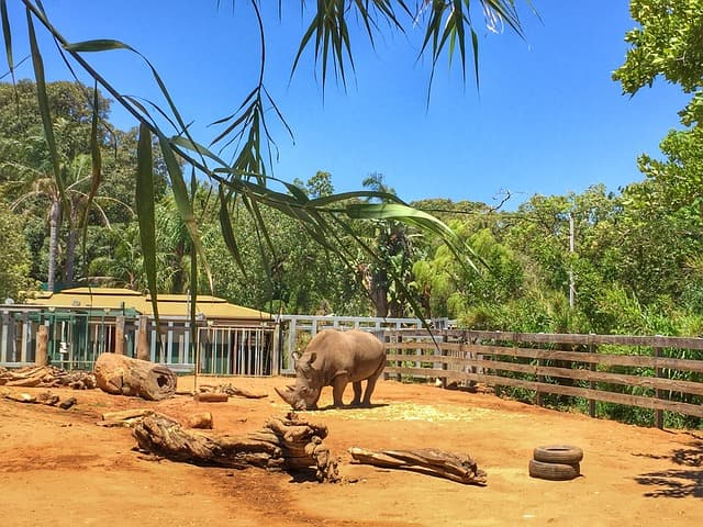Visit The Perth Zoo