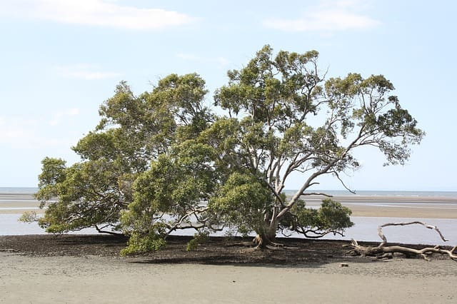 Nudgee Beach Swimming