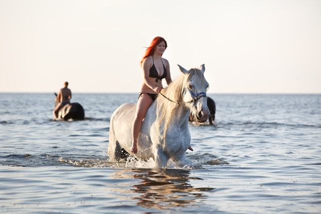 Chukka Horseback Ride And Swim Jamaica