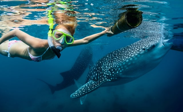 13 Best Places For Swimming With Sharks