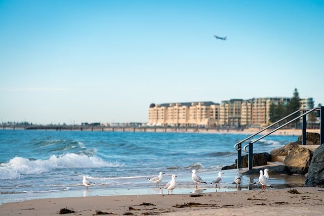 Adelaide attractions: Adelaide Beaches
