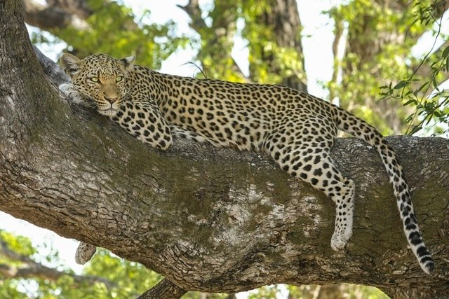 Amazing Yala National Park Facts