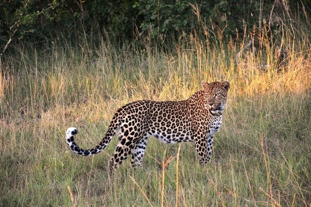 Yala National Park Tours