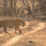 Complete Travel Guide To Satpura National Park