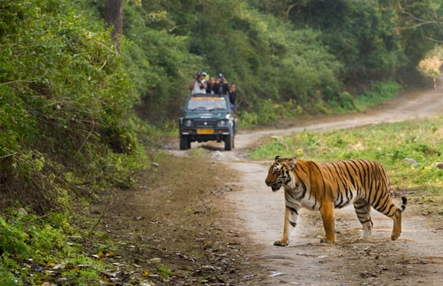 Jeep Safari Jim Corbett Park Safari